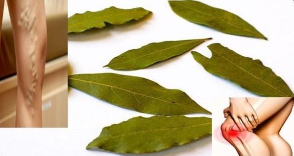 Лавровый лист и его лечебные свойства